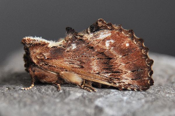 Moth Year List 2010